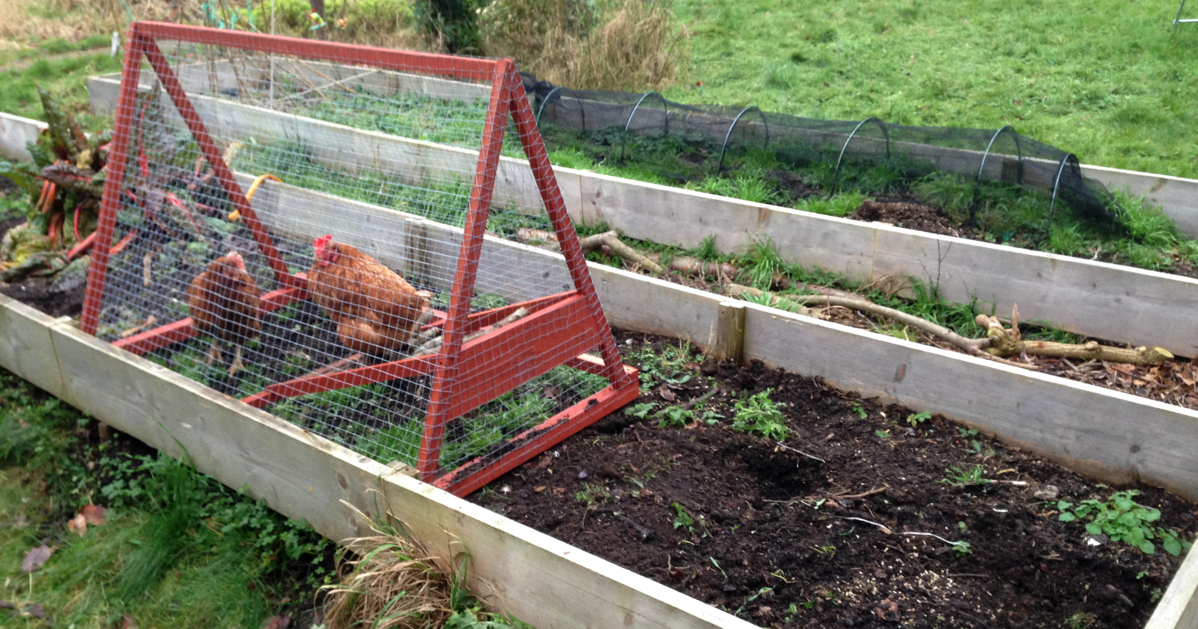 Little red (chicken) tractor – Internet of Hens